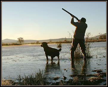 Duck Hunting Top Clicks